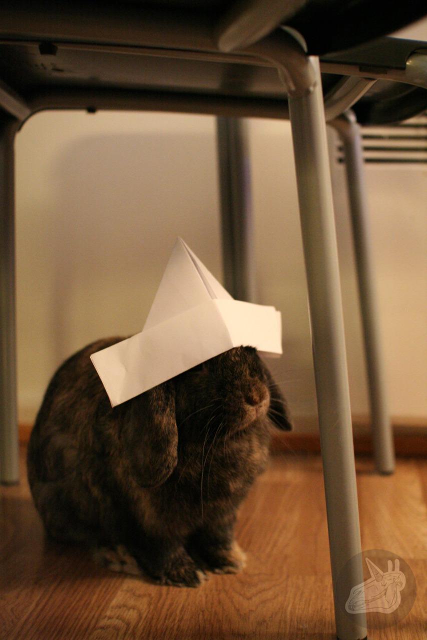 Captain Bunny Says Ahoy!