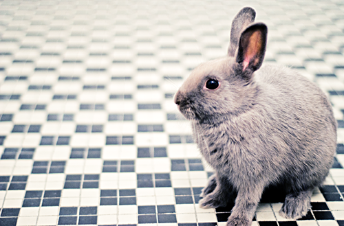 Bunny Sits on a Sea of Tile