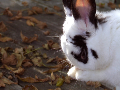 Bunny Mourns the Loss of Summer