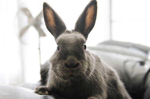 Bunny Knows How to Pose for Her Portrait