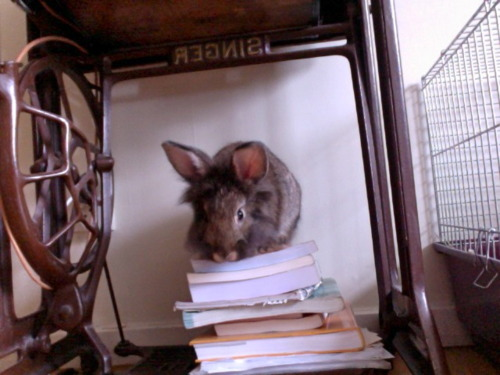 Tutor Bunny Says It's Time to Hit the Books!