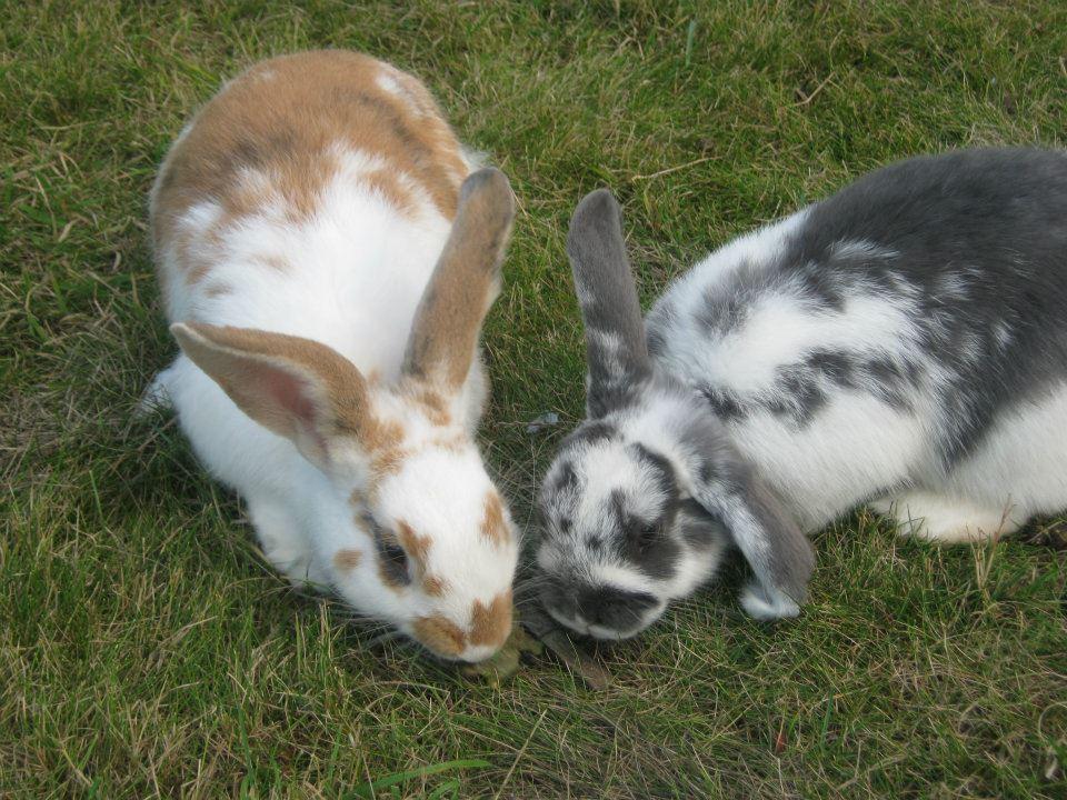 Conspirator Bunnies Conspire
