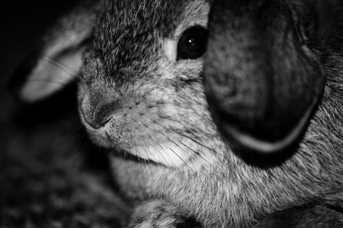 Bunny Puts Her Ears Forward