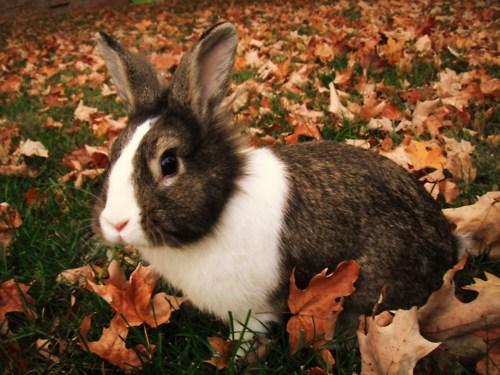 Bunny Among Autumn Leaves