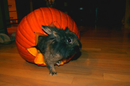 Bunny Climbs Out of Her Pumpkin Coach