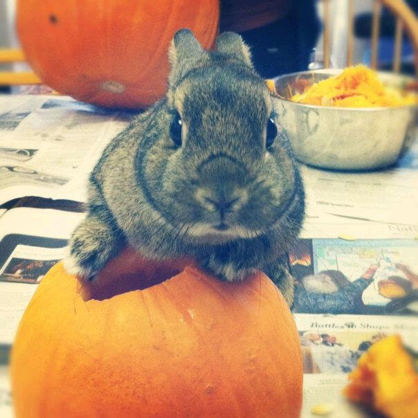 Bunny Is Ready to Carve Pumpkins Now
