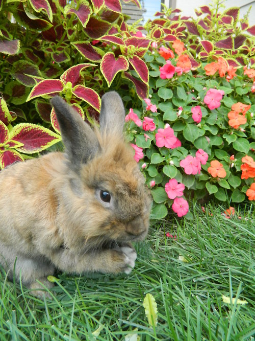 Bunny Says Grace Before Tucking Into the Flower Bed