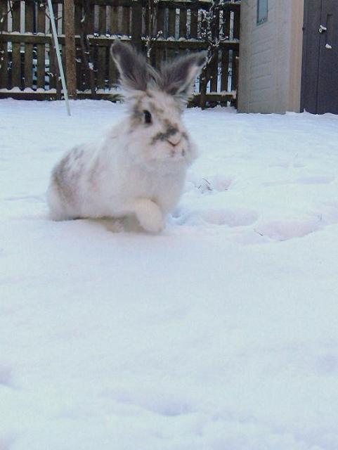 Bunny Goes for a Romp through the Snow