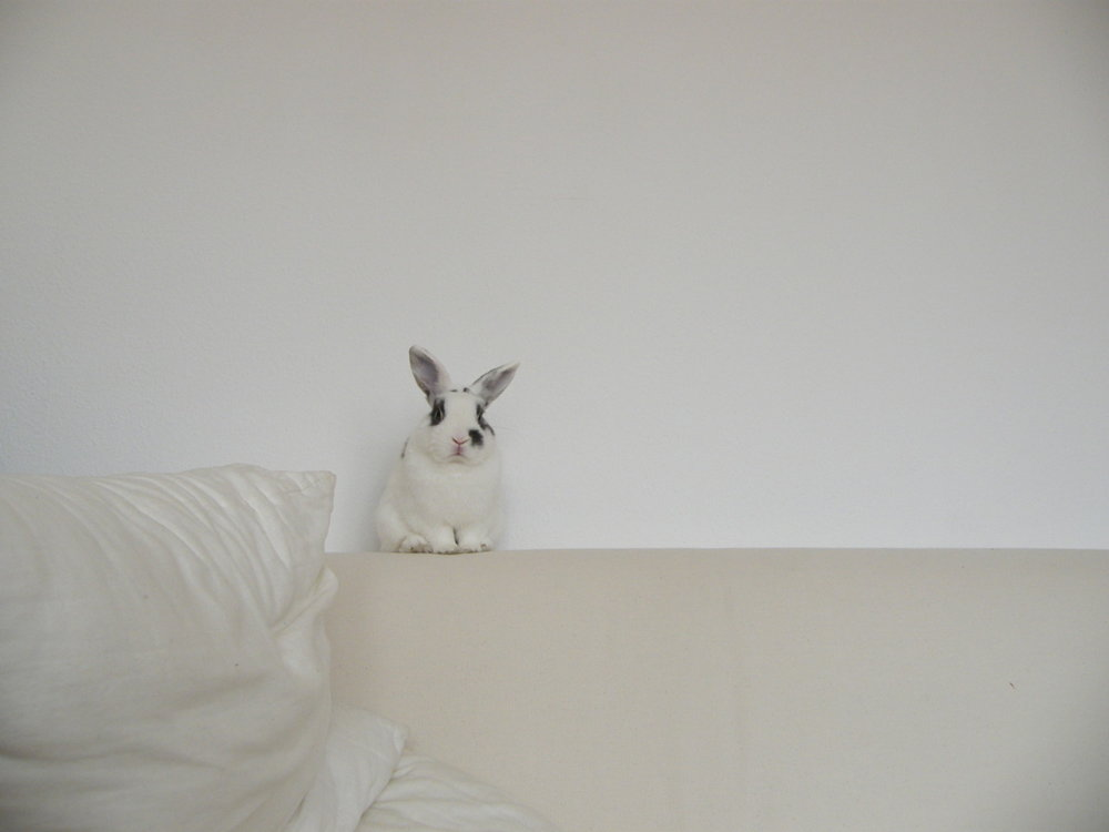 What a Big Sofa for Such a Small Bunny. Come Sit!