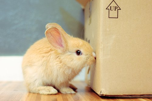 Oh, I Won't Chew Up This Box. I'm Just Sniffing It to... Make Sure It's Safe for You. Yes, That's It!