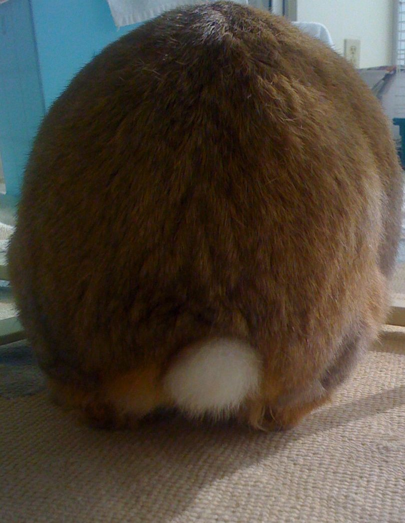 Round Bunny Rump