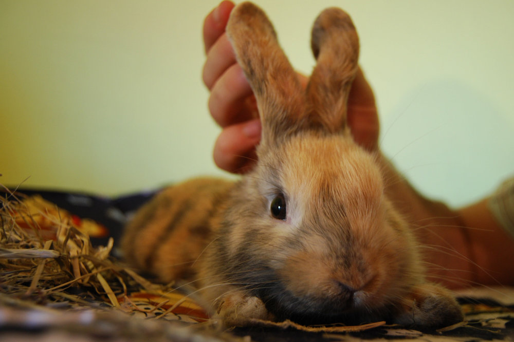 Bunny's Floppy Ears Can Go Upright with a Little Help