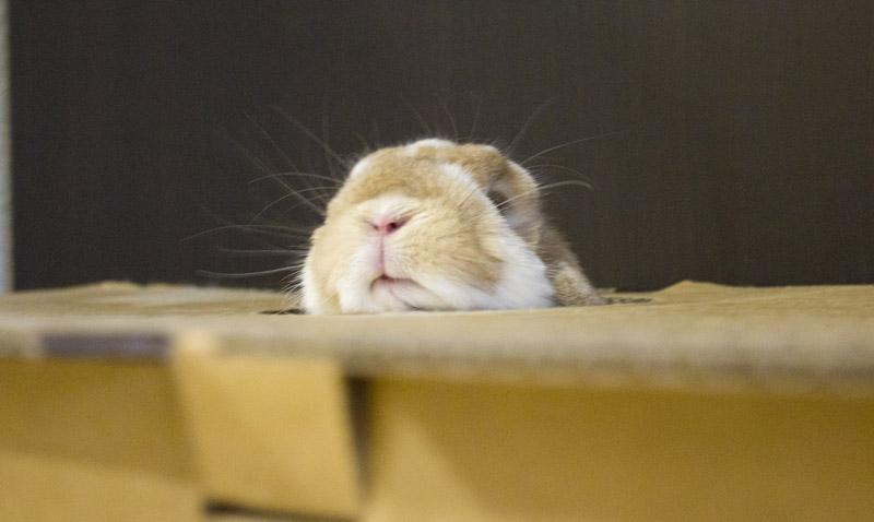 Periscope Bunny!