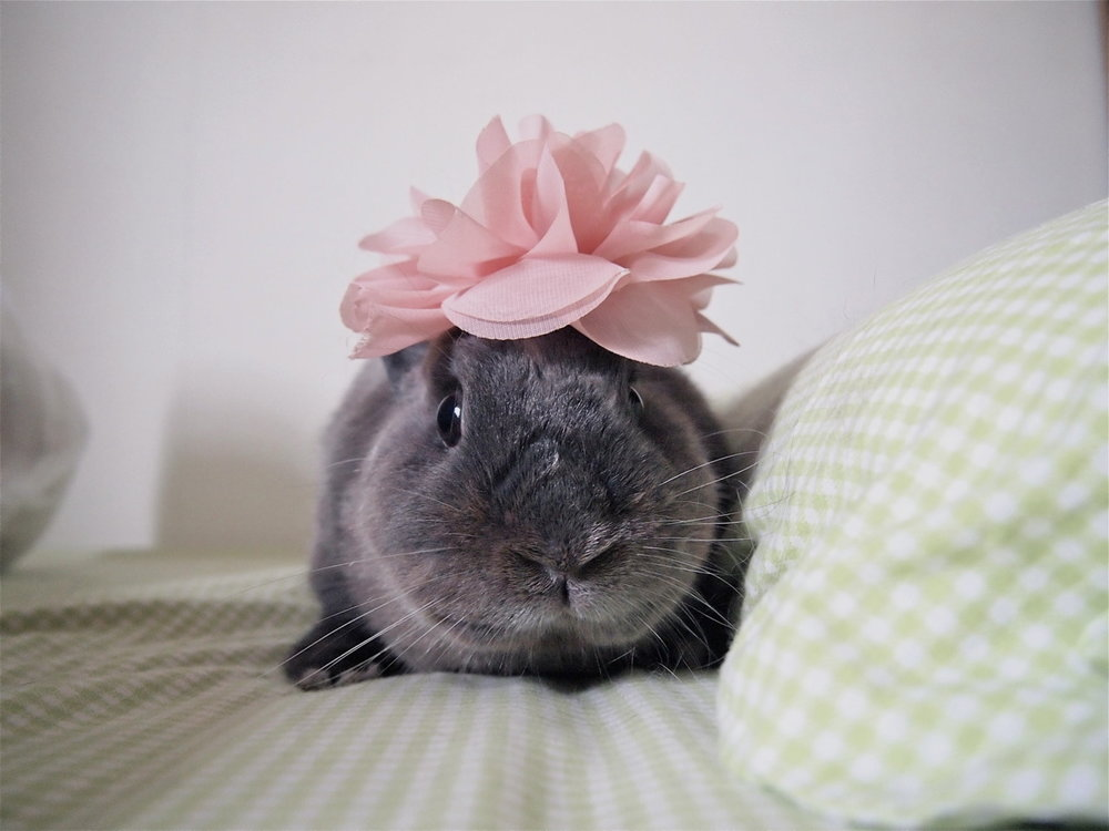Accessorizing Bunny