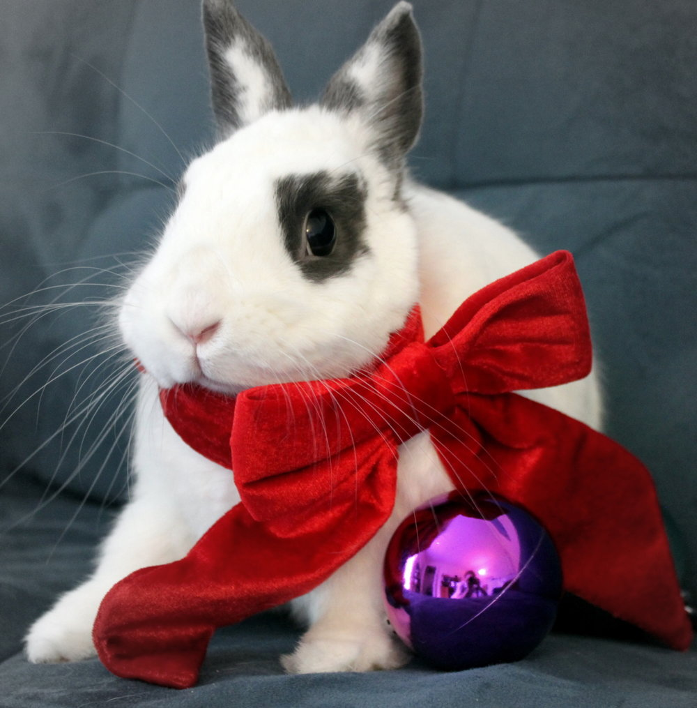Bunny's Holiday Photo Shoot 2
