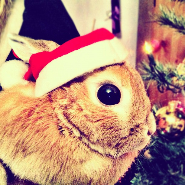 Bunny Is Shocked at the Amount of Presents You Gave Him