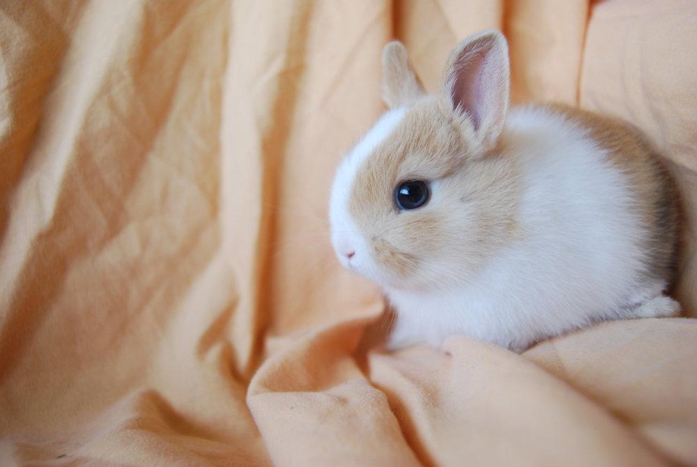 Bunny Has Pretty Blue Eyes