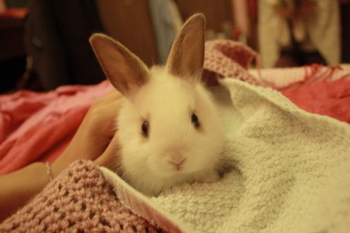 Bunny Looks Cozy
