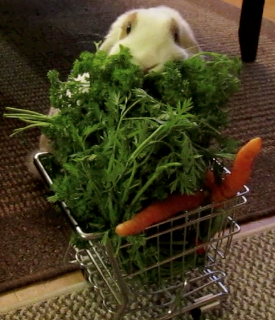Bunny Goes Grocery Shopping