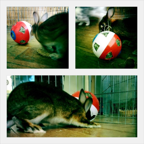 Bunny Has a Ball with His New Toy