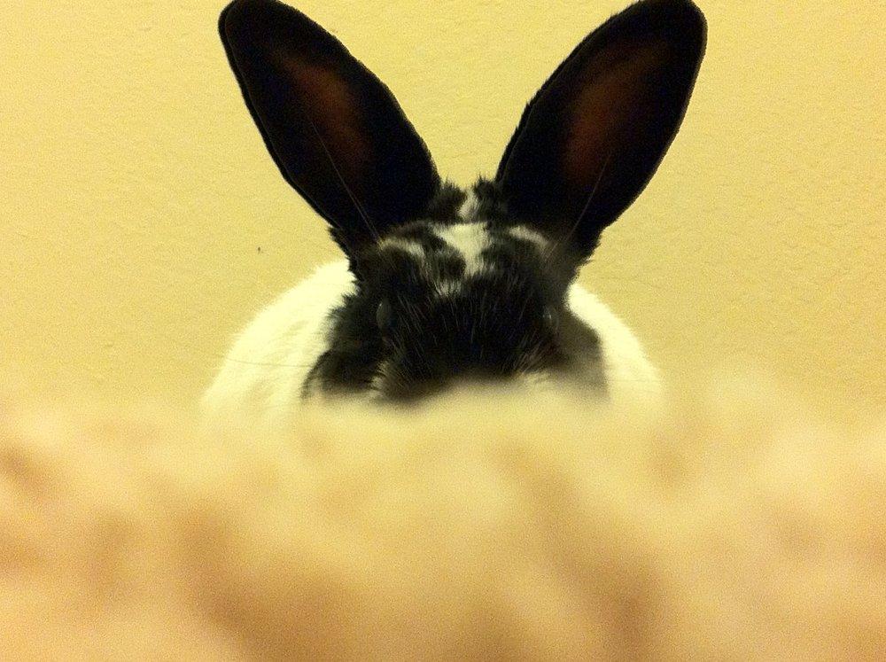 Bunny Plays Peek-a-Boo 1
