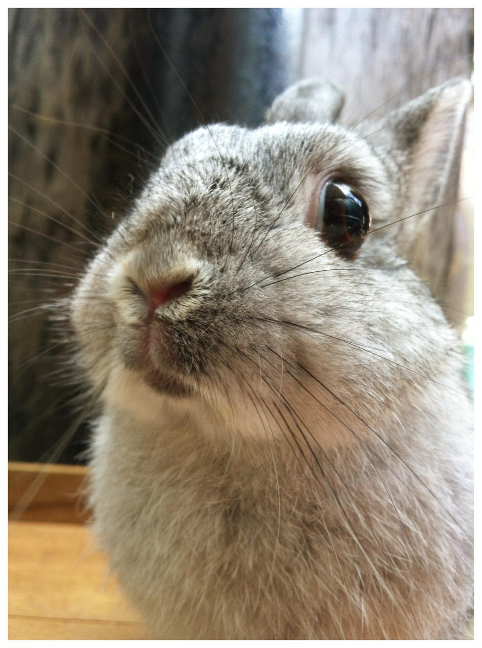 Bunny Looks Inquisitive