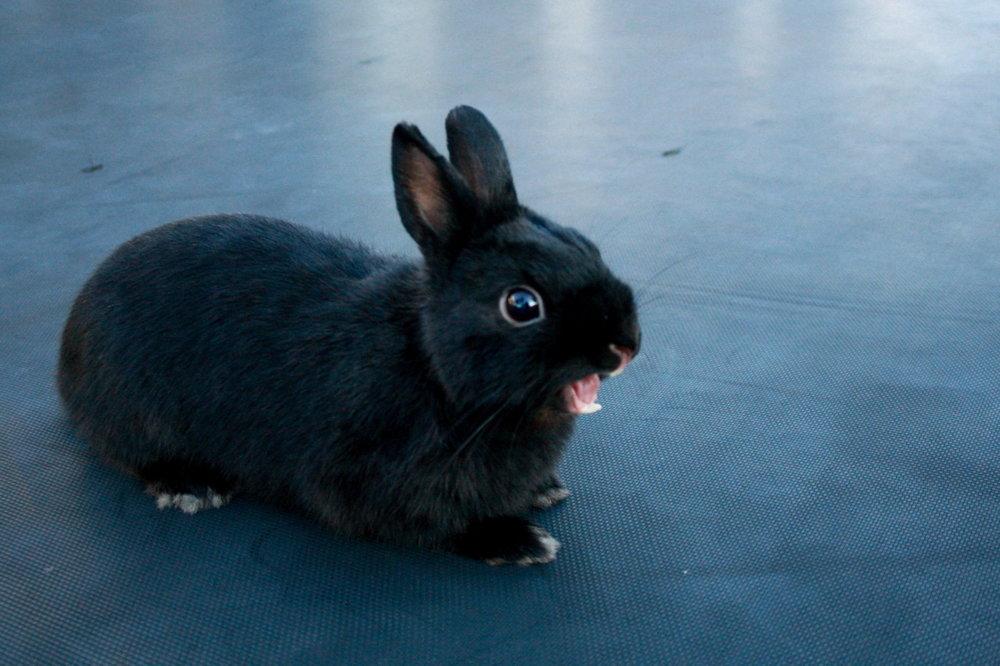Bunny's Big Yawn