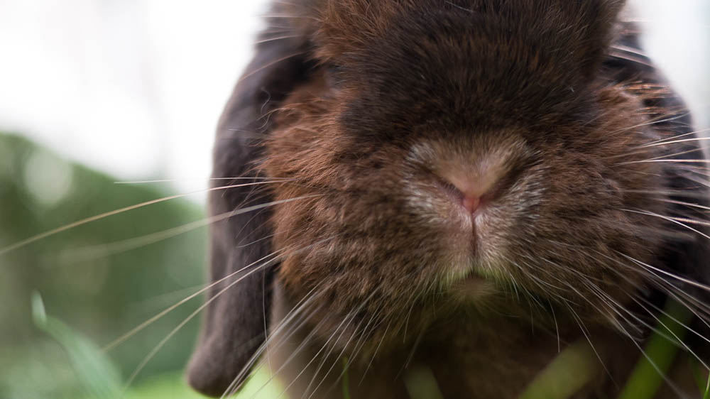 Bunny Feels Out the Grass with Those Whiskers
