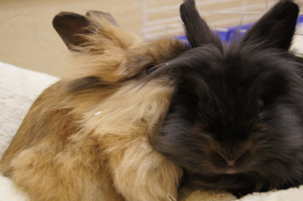 Bunny Tells Her Friend a Secret