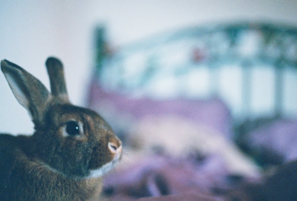 Bunny Waits Patiently for Breakfast Time Before Waking Up Hoomin