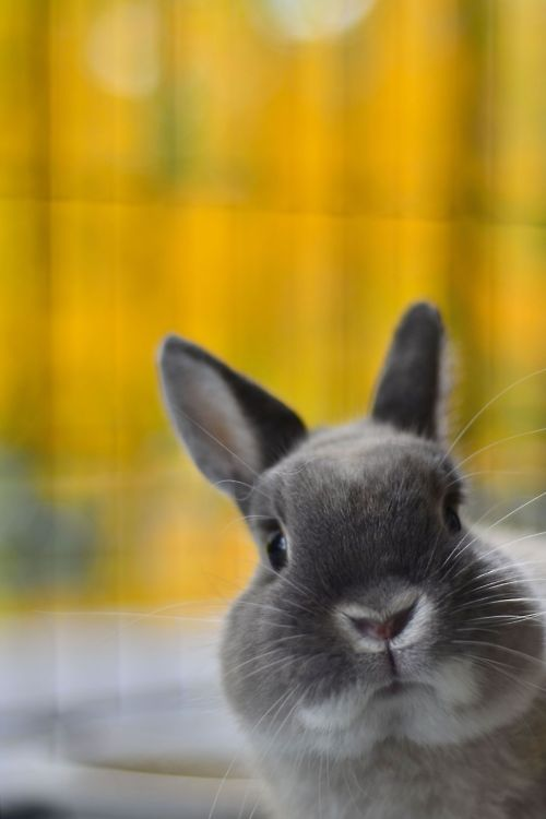 Bunny Practices His Photobombing Skills