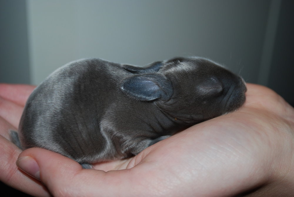 Baby Bunny Is Part of a Surprise Litter