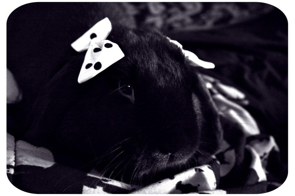 Feminine Bunny Wears Bows on Her Ears