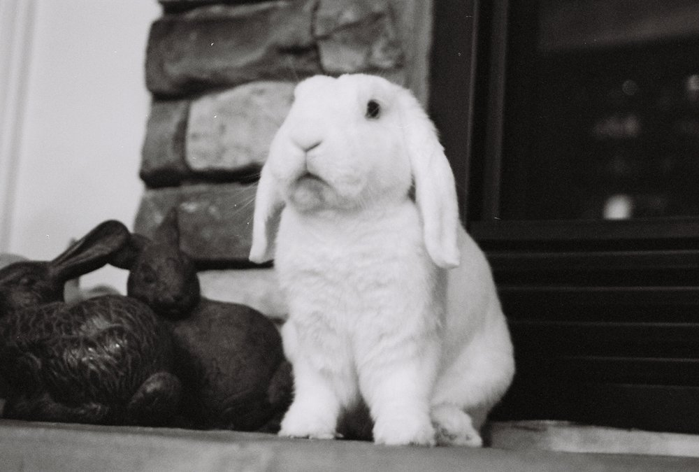 You Mean Those Bunnies Next to Me Aren't… Real?