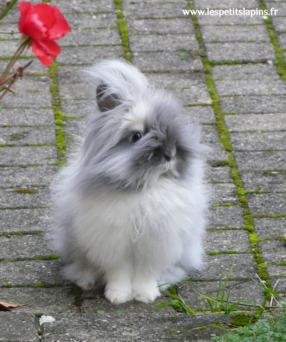 Should Bunny Go Right to the Flower Garden or Left to the Vegetable Garden?