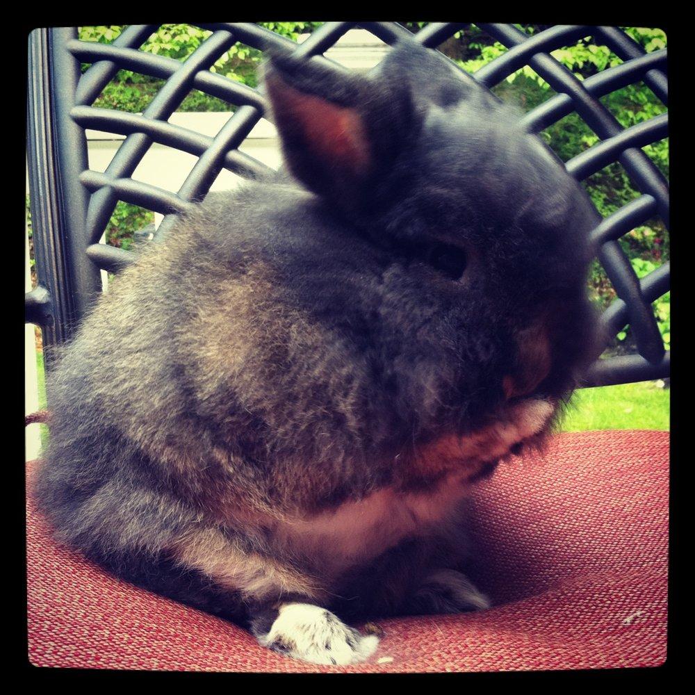 Bunny Stifles a Giggle