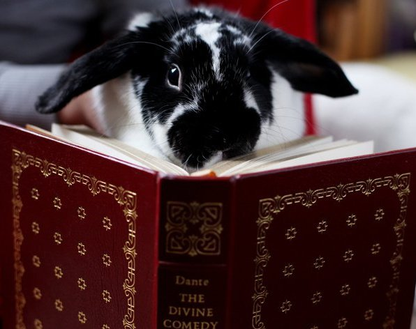 Bunny Is a Scholarly Bunny