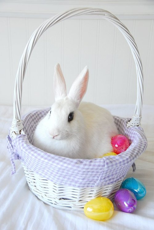 Bunny Finds a Cozy Spot in the Easter Basket