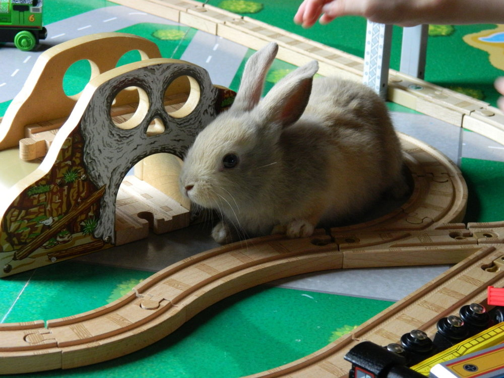 Bunny Takes Over the Train Set