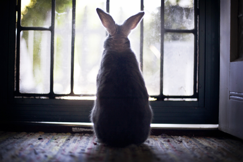 Bunny Waits for the Mailman to Deliver the Treats He Ordered