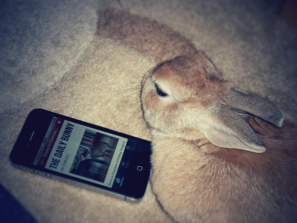 Bunny Checks Out the Daily Bunny iPhone App