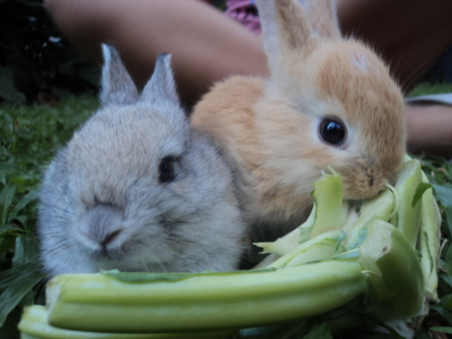Bunnies Share a Crunchy Snack