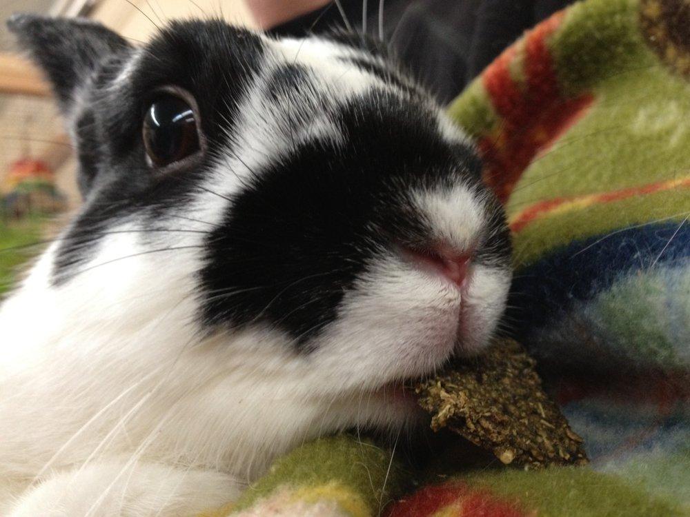 Bunny Is a Delicate Nibbler
