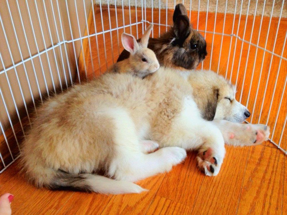 Guard Bunnies Keep Watch Over Sleeping Pup