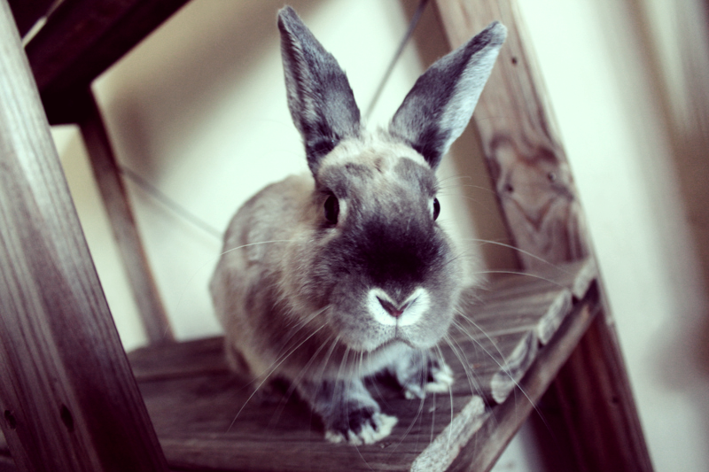 Bunny Is an Inquisitive Bunny