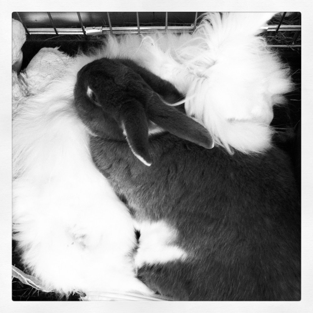 Bunnies Cuddle Together