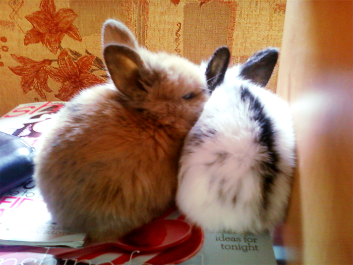 Sleepy Bunnies Nuzzle before a Nap