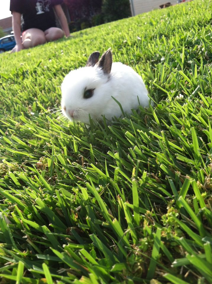 Tiny Bunny Explores the Yard