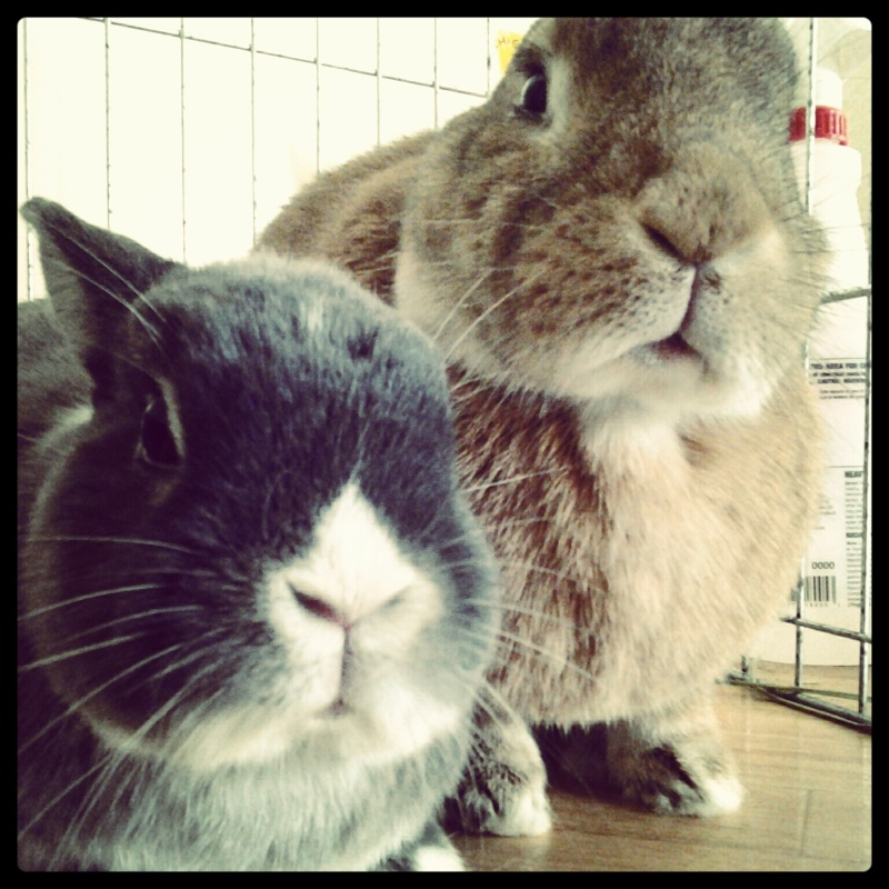 Bunnies Stop Talking When Hoomin Enters the Room
