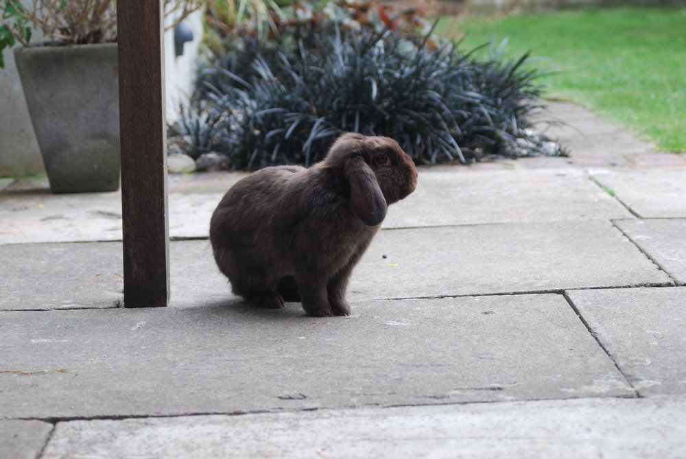Bunny Takes Some Air on the Patio